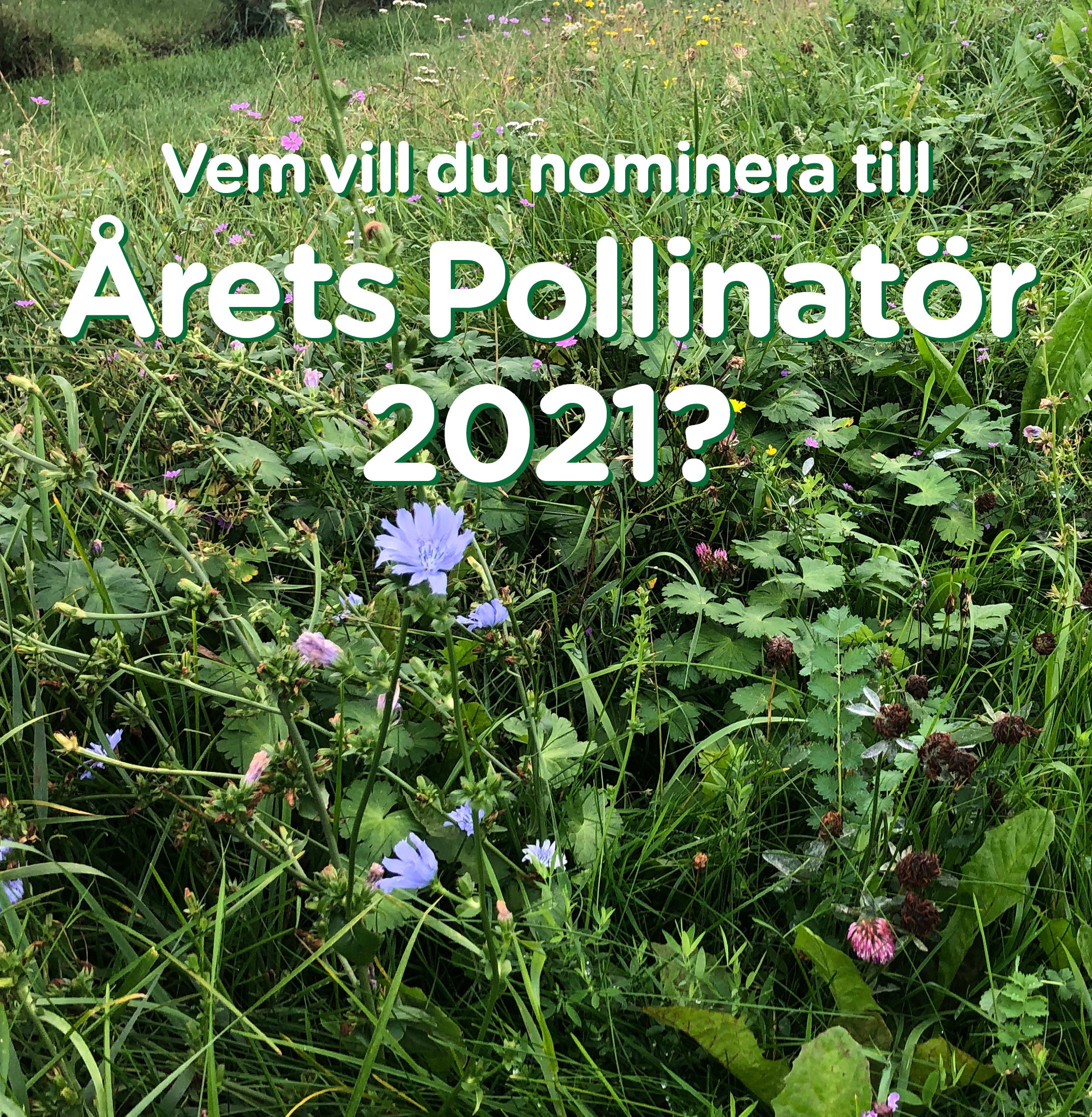 Årets-Pollinatör-bild